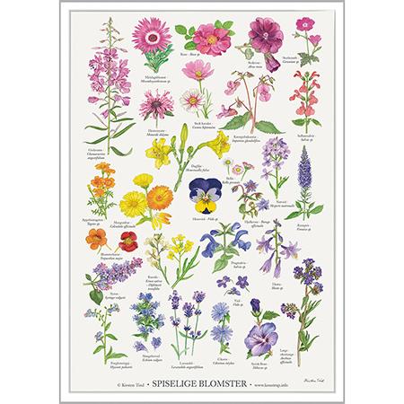 Spiselige-blomster-plakat-450