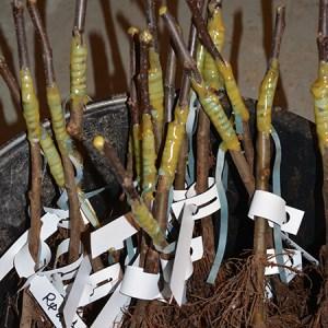 Bliv ferm til planteformering - Podekursus @ Naturplanteskolen | Hedehusene | Danmark