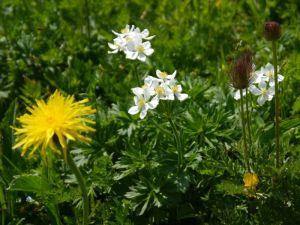 Magerwiesen sind artenreiche Lebensräume (Foto: Naturschutzanwaltschaft).