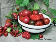 Tomatengeschichten_fuer_Home-Page.020