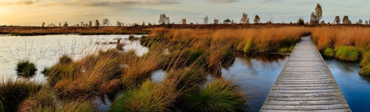 nationalpark eifel naturpark hohes venn