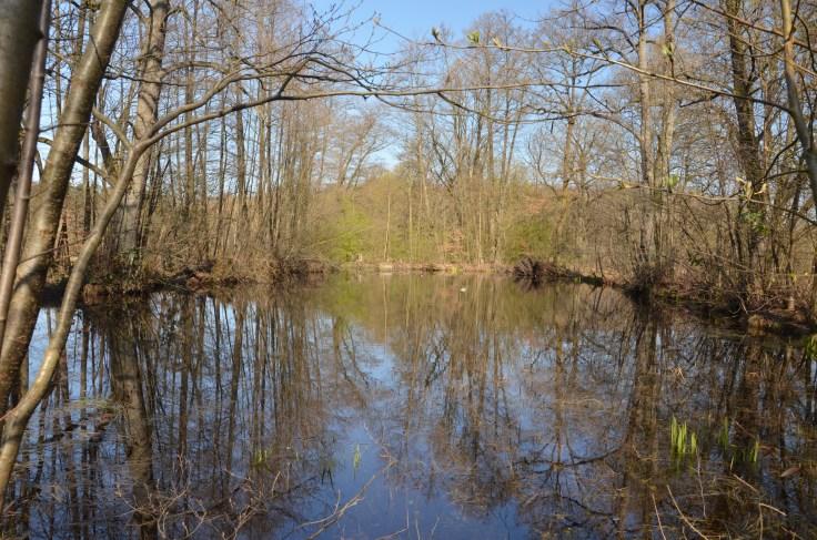 naturschutzgebiet im mörsbacher grund von darmstadt arheilgen