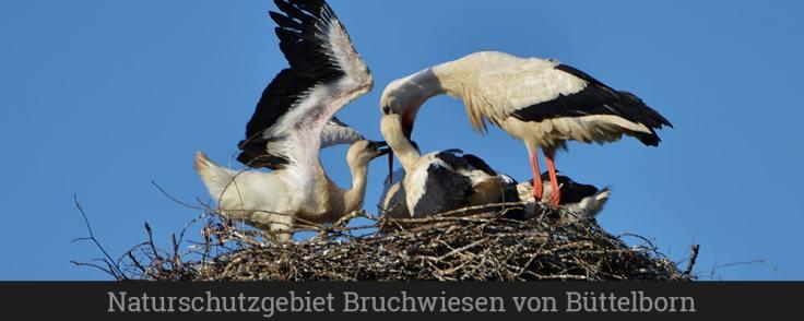 Naturschutzgebiet Bruchwiesen von Büttelborn (1)