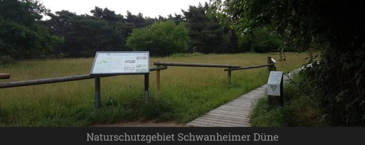 Naturschutzgebiet Schwanheimer Düne