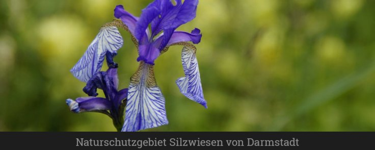 Naturschutzgebiet Silzwiesen von Darmstadt