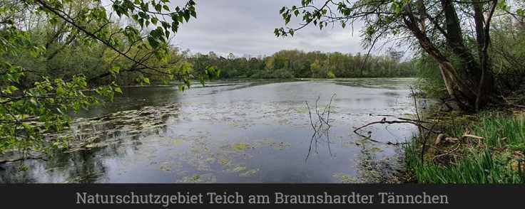 Naturschutzgebiet Teich am Braunshardter Tännchen