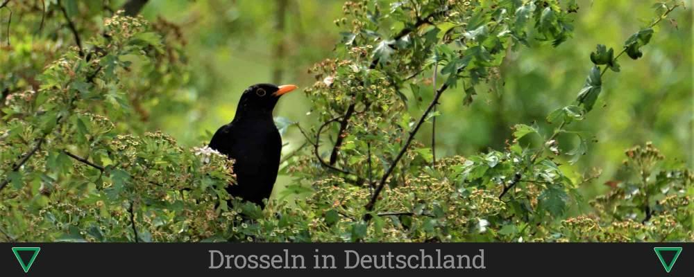 Drosseln in Deutschland