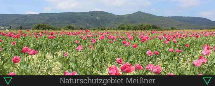 Naturschutzgebiet Meißner (1)