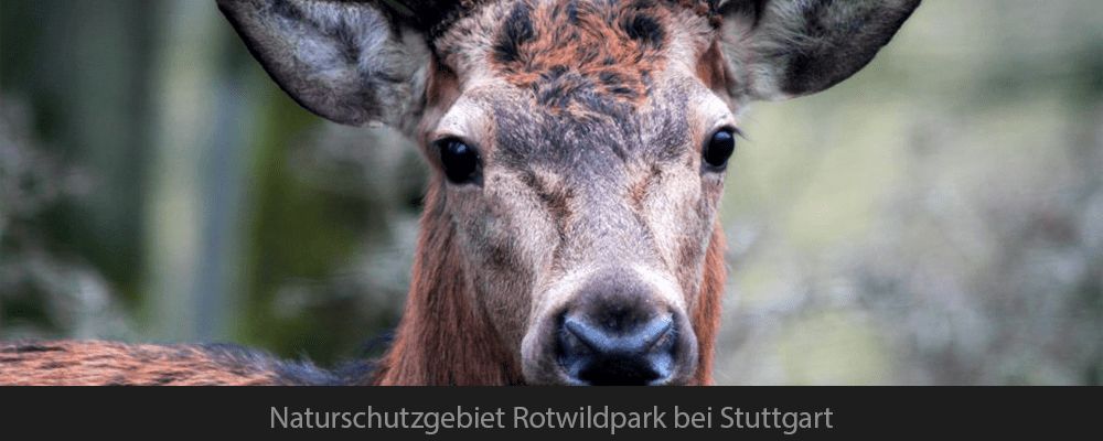 Naturschutzgebiet Rotwildpark bei Stuttgart