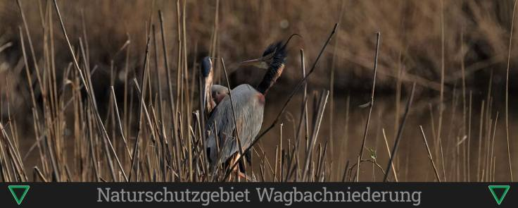Naturschutzgebiet Wagbachniederung