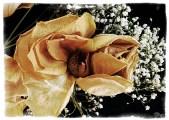 WP_20130307_012 Faded