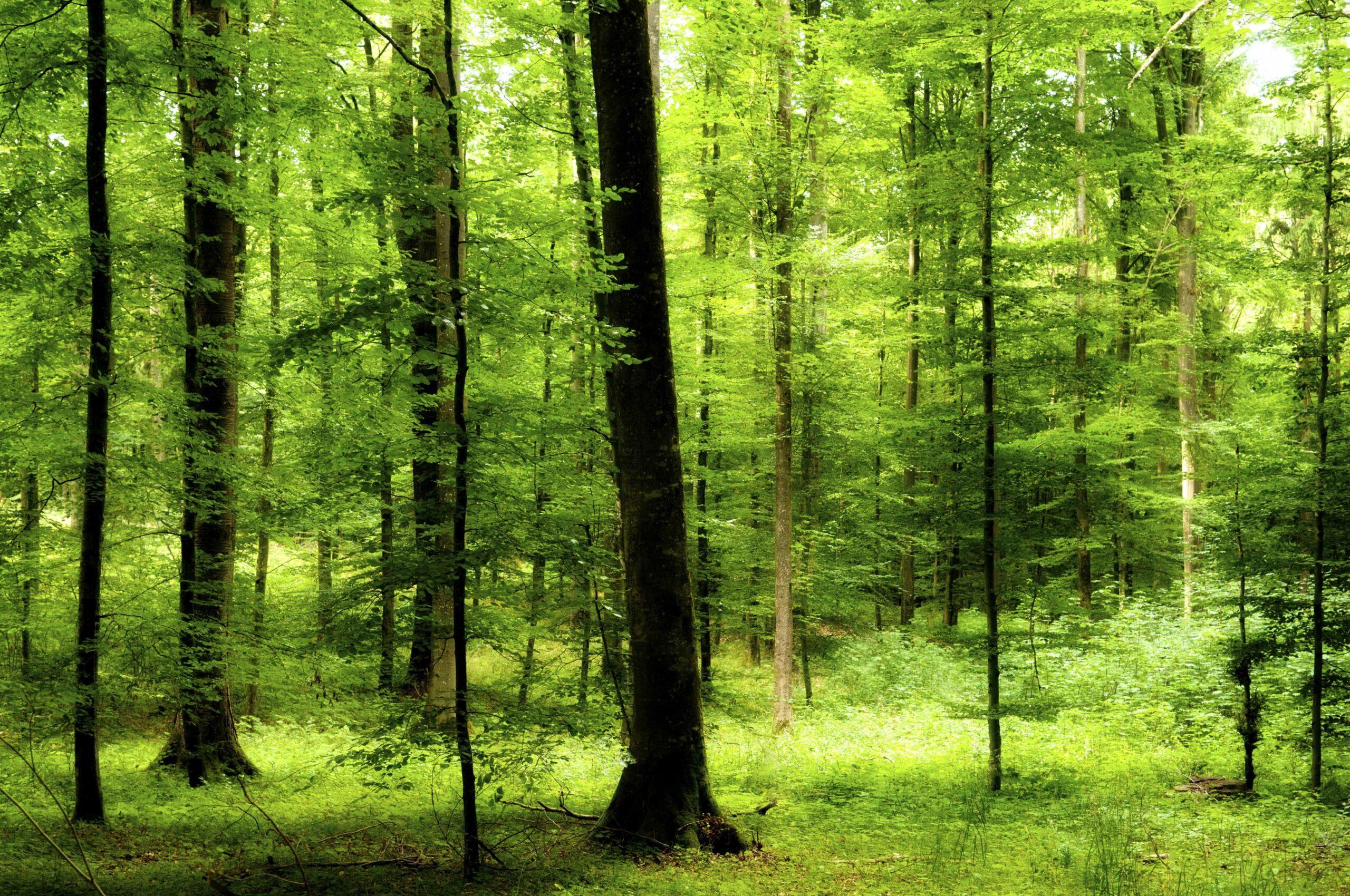 Forstleute für einen Nationalpark Spessart