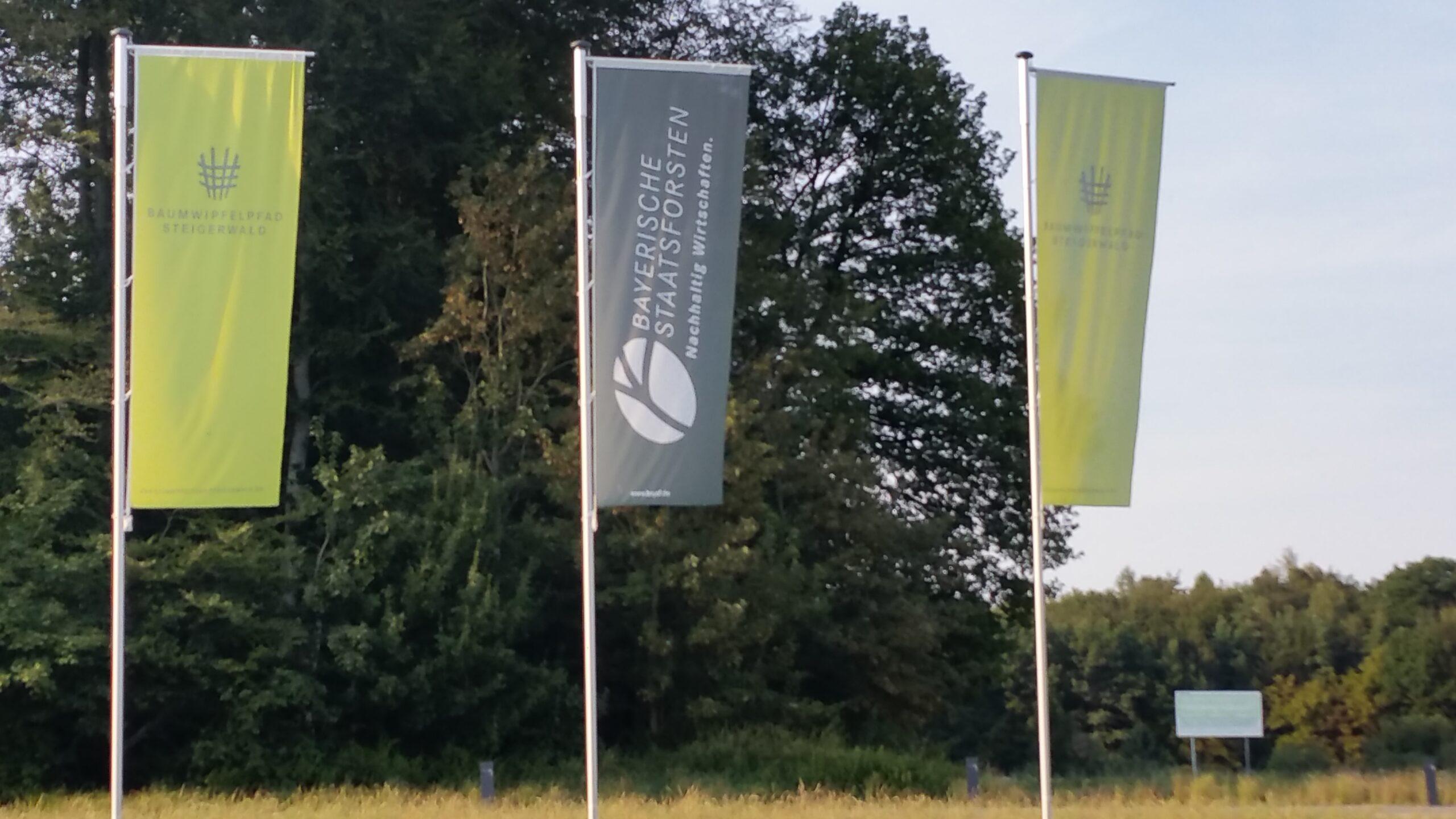 Infozentren statt Waldschutz