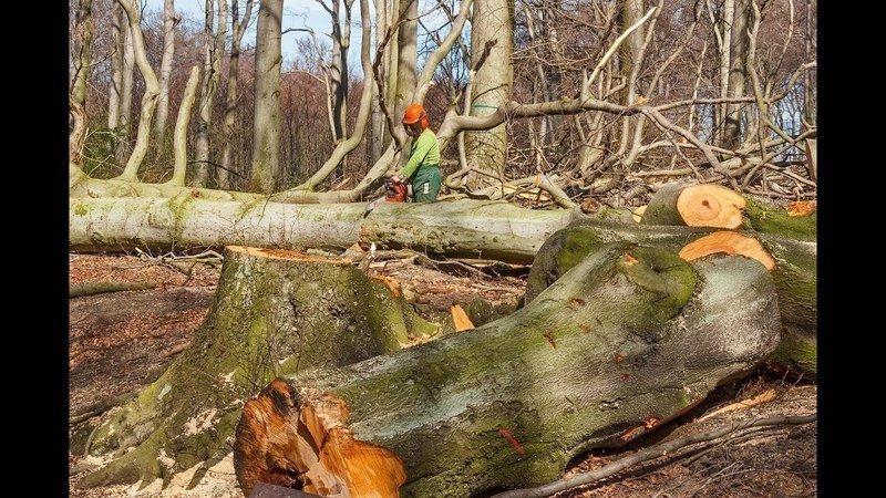 Waldschutz ist besser für Klima als Holznutzung