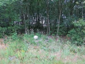 natuurbegraven-recreatiegebied