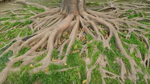 Begraven en natuurbehoud horen niet bij elkaar