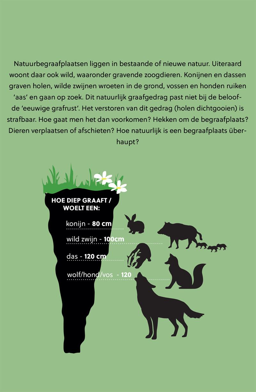 Hoe diep graven zoogdieren in een natuurbegraafplaats