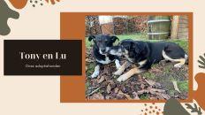 Adoptiehonden Tony en Lu