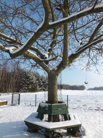Boombank van geïmpregneerd vuren onder de sneeuw