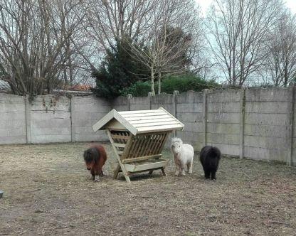 Hooiruif met Pony's