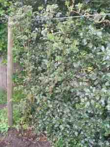 Tip 8: Benut de randen (in alle vormen) van uw tuin