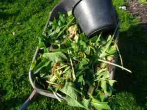 Tip 4: Verrijk de bodem met organisch materiaal