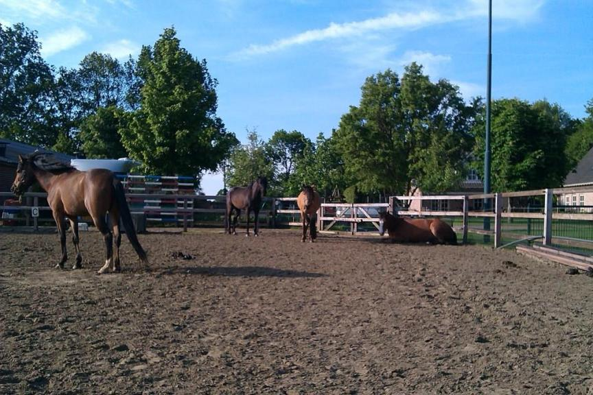 onderzoek naar sociaal contact paarden