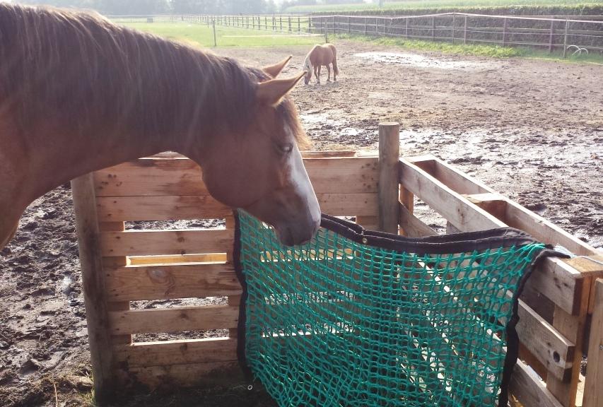Verrassend Ideeën voor je nieuwe slowfeeder   Natuurlijk Paarden HD-39