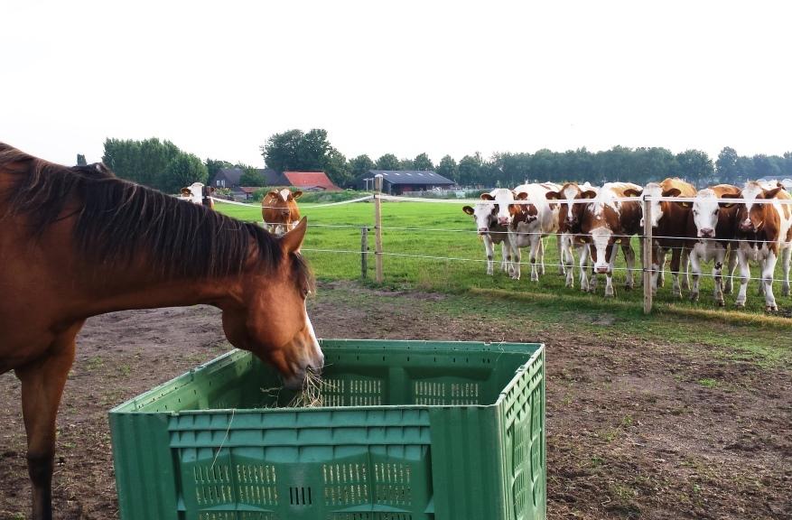 bliss-koeien