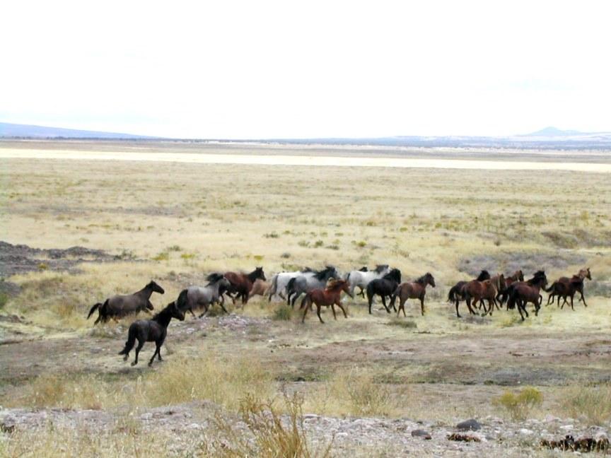 wat wilde paarden ons leren over paarden houden