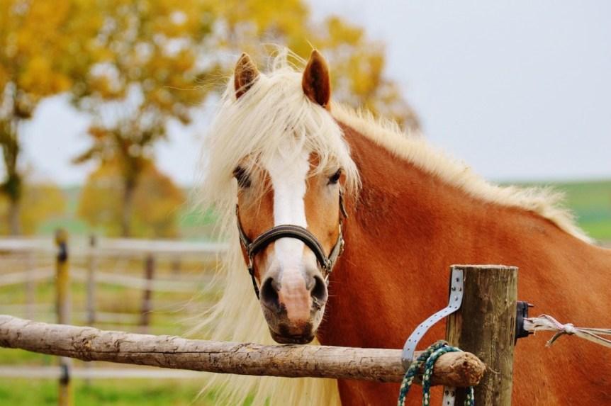 paard hoefbevangen in de herfst