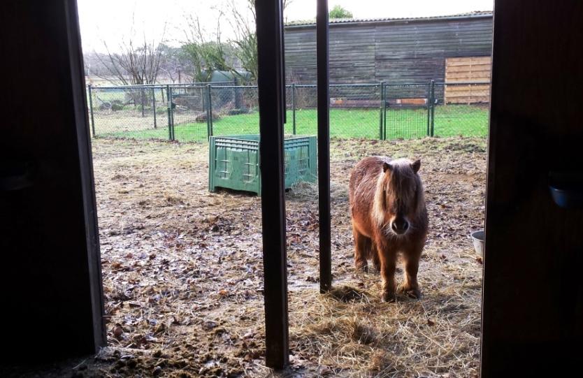 natuurlijk paarden schuilstal