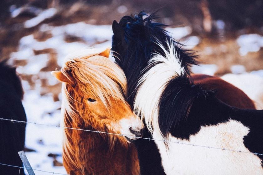 voer je pony gezond