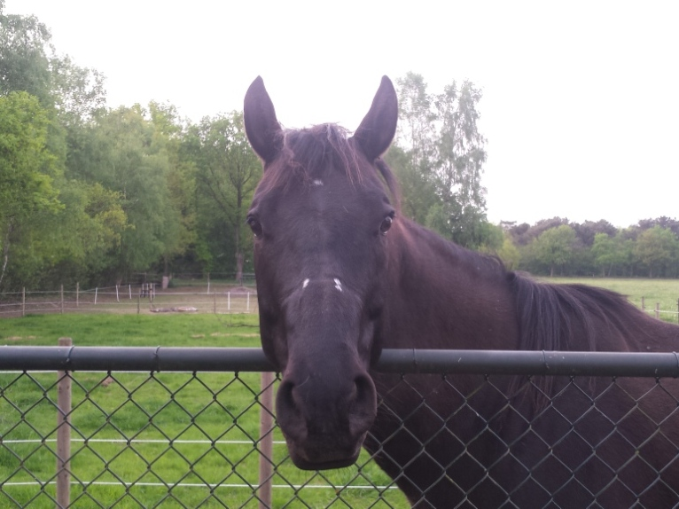ziekte van lyme bij paarden