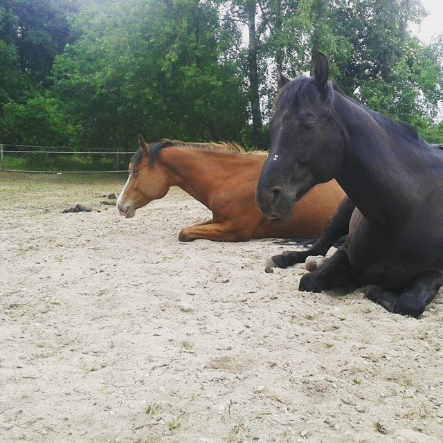natuurlijk-paarden-blog-9