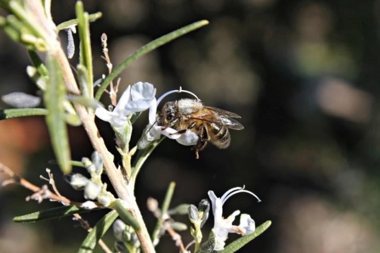 De beste planten tegen muggen | Lepona Tuinarrangeurs