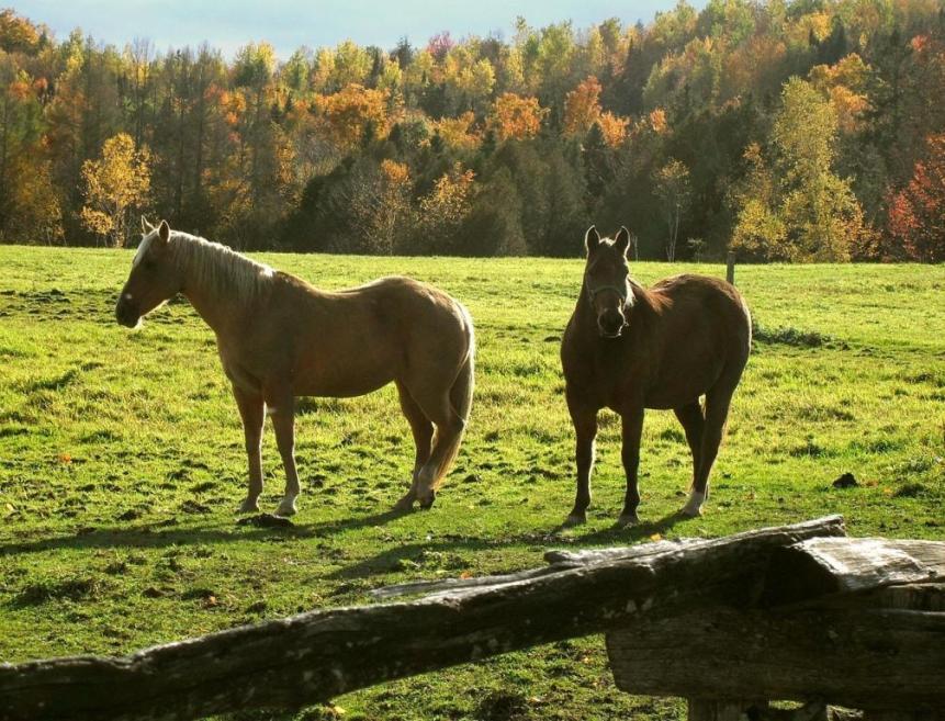 voedingstips herfst paard