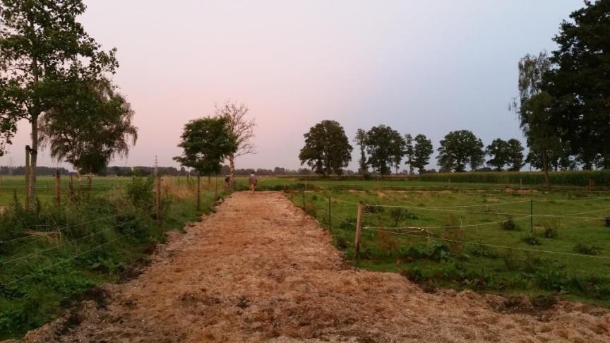 paddock systeem paard