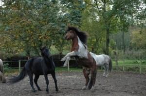buitenkijken natuurlijk paarden