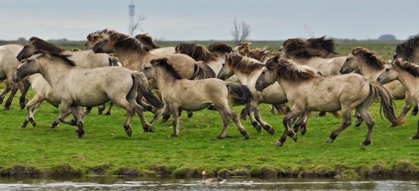 problemen ondeugden te weinig beweging paard