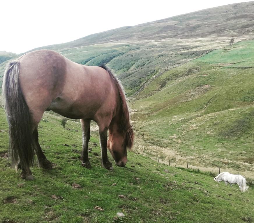 paarden schotland