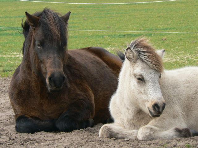 zomereczeem paarden