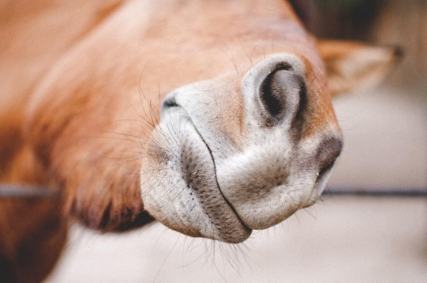 Mineralenbuffet voor je paard