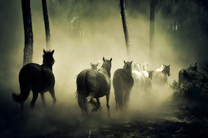 Paarden in verbinding met de andere wereld