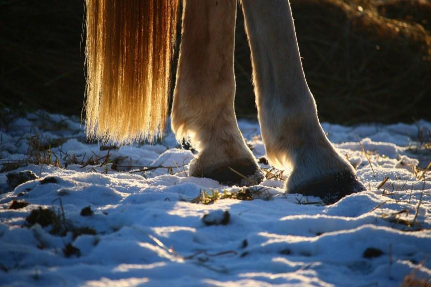 hoefproblemen paard herfst winter