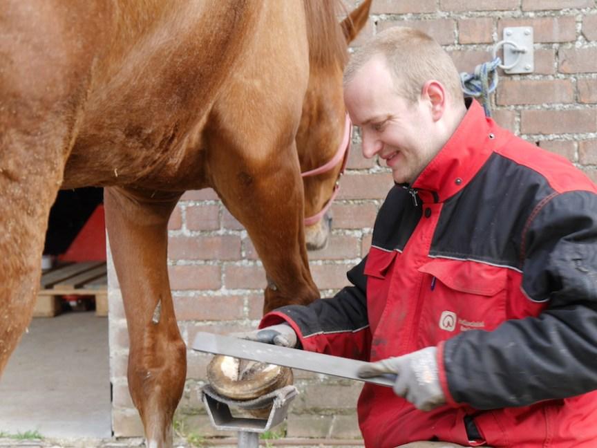 Hoefspecialist Klaas Feuth bekapt een paard