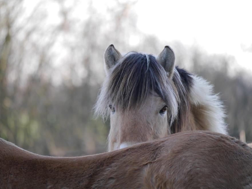 bang om je paard pijn te doen