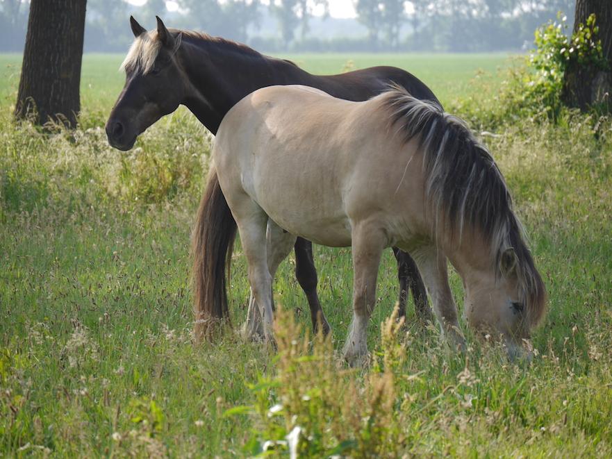 angst voor je paard: wat kun je doen?