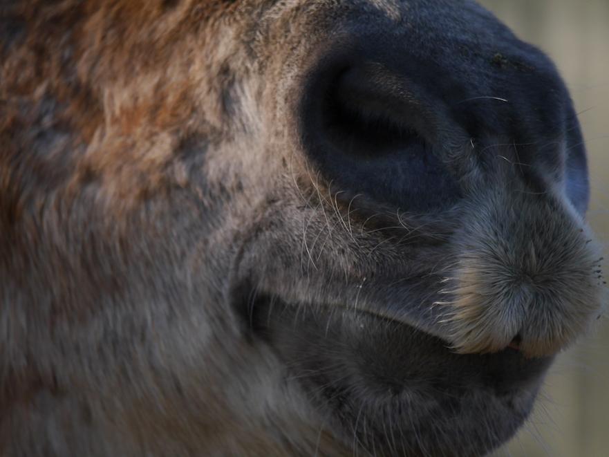angst voor de mond van je paard