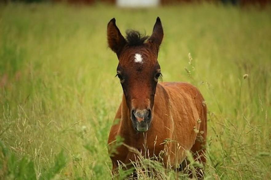 de lever van een paard